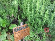 Bio Rosmarin-Wasser 2500 ml