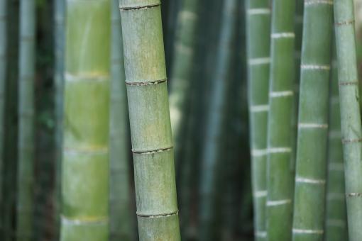 Bio Bambuswasser 500 ml